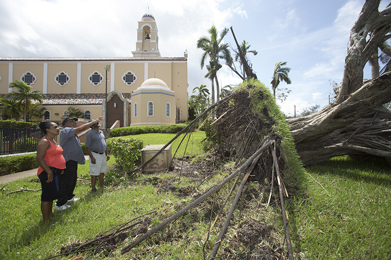 Parishioners point at a fallen ficus tree uprooted on the grounds of St. Mary Cathedral in Miami after the passage of Hurricane Irma. Damage from the storm in the Archdiocese of Miami was mercifully good: a lot of tree damage, some flooding but most of the structures, including those in the hardest-hit Keys, held up very well.