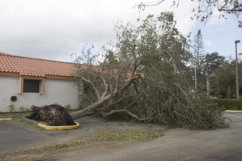 A fallen tree blocks the parking lot at St. Martha Church's parish hall, next to the archdiocesan Pastoral Center in Miami Shores. The aftermath of Hurricane Irma in the Archdiocese of Miami was mercifully good: a lot of tree damage, some flooding but most of the structures, including those in the hardest-hit Keys, held up very well.