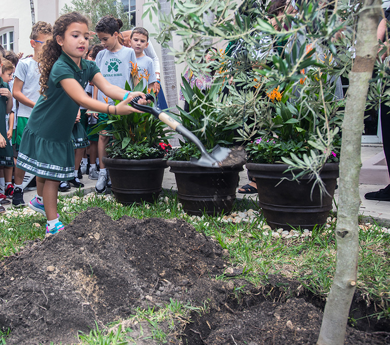 St. Patrick School first-grader Alessia Torres, 6, takes a turn shoveling dirt into the hole where the olive tree was planted Nov. 15.